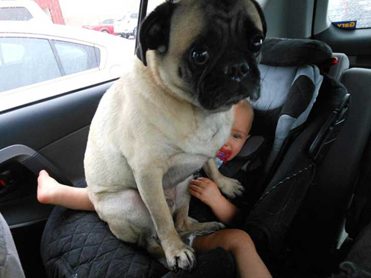 funny-dogs-violate-personal-space-20__605