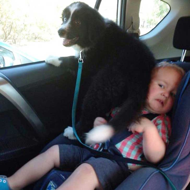 funny-dogs-violate-personal-space-33__605
