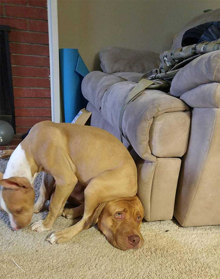 funny-dogs-violate-personal-space-401__605