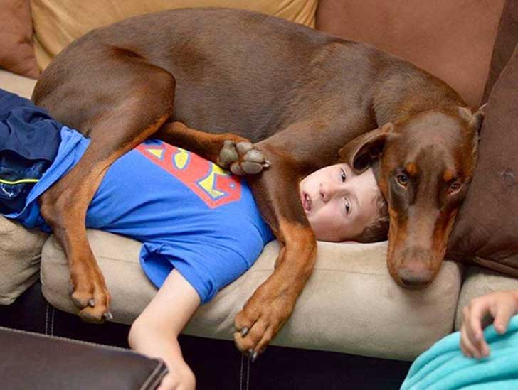 funny-dogs-violate-personal-space-53__605