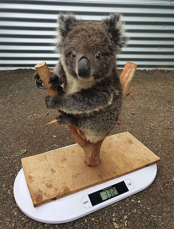 animals being weighted 5ee9c8eee93fd 700