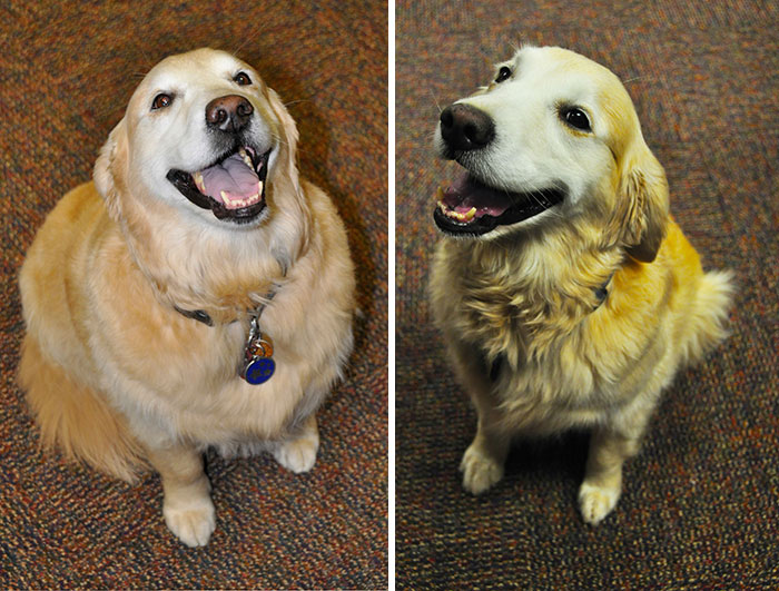 fat dogs losing weight before after 13 5eda57b6afcd3 700