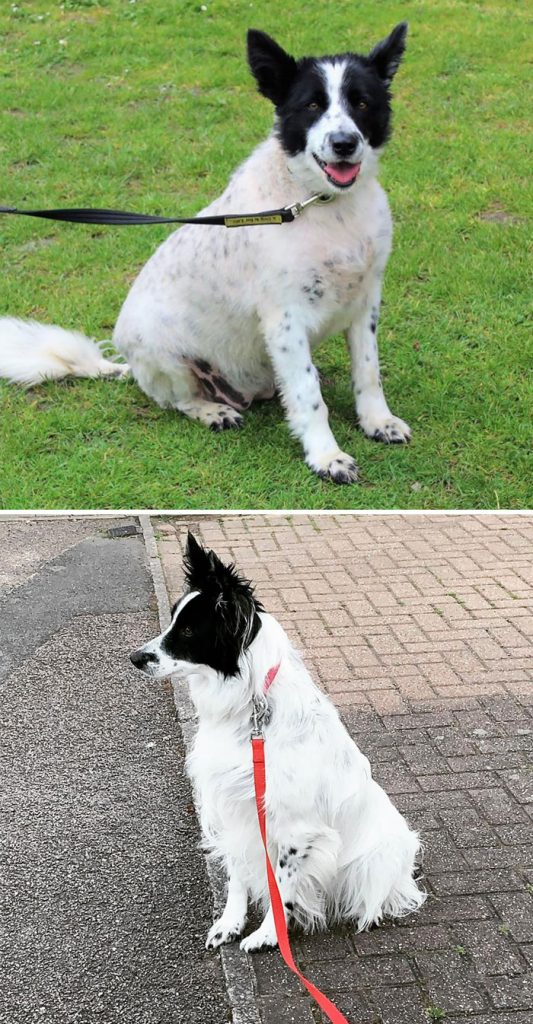 fat dogs losing weight before after 208 5edf2faddc816 700