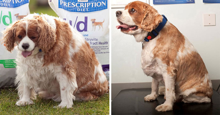 fat dogs losing weight before after 320 5edf885964ff4 700