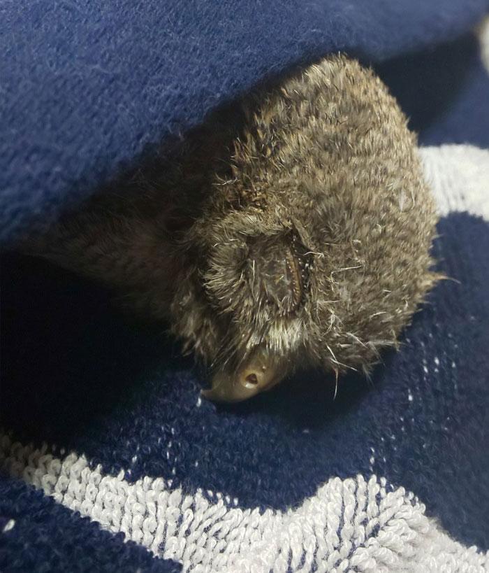 sleeping baby owls face down 11 5ef2f7087bba2 700