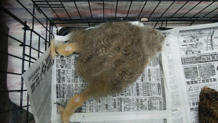 sleeping baby owls face down 12 5ef2f72c80f42 700