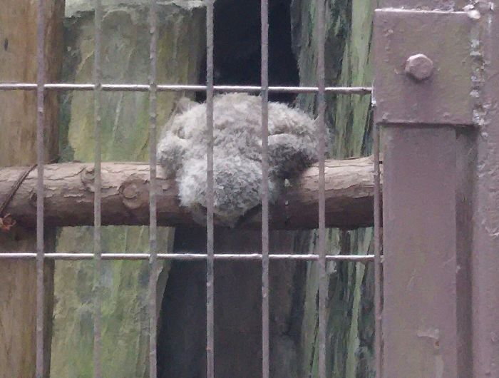 sleeping baby owls face down 20 5ef2fb0c98829 700