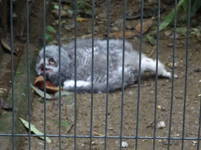 sleeping baby owls face down 21 5ef2fbe7b1cc6 700