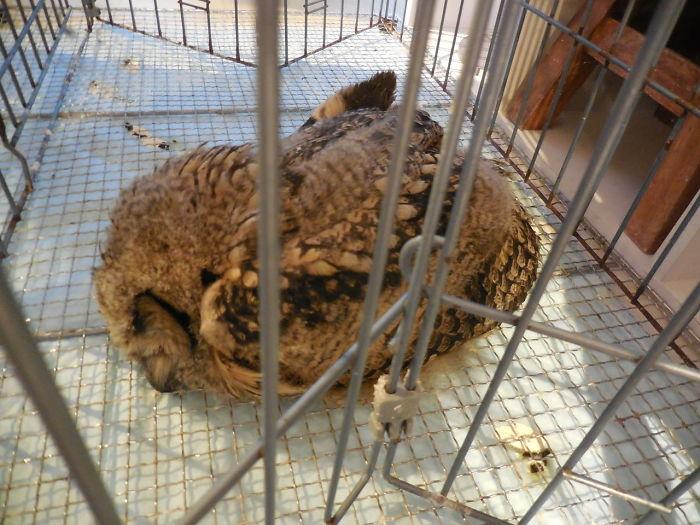 sleeping baby owls face down 22 5ef2fc585e338 700