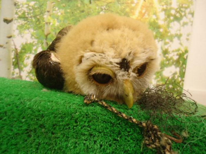 sleeping baby owls face down 26 5ef306fb5d1b5 700