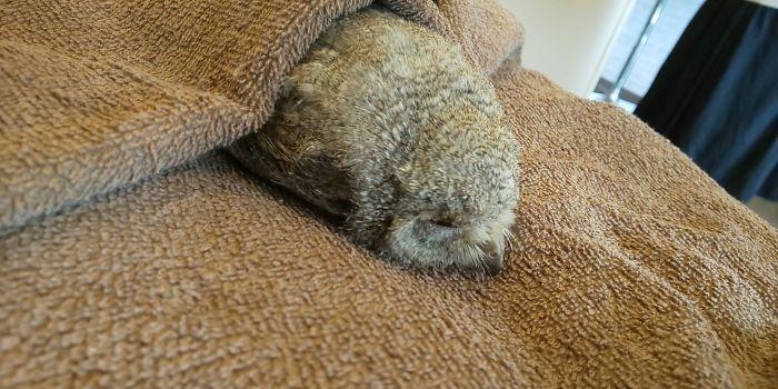 sleeping baby owls face down 9 5ef2f6b9abe32 700