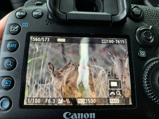 failed wildlife photos9