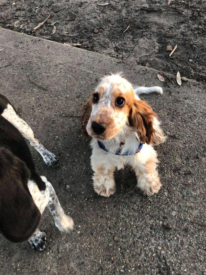 funny cute dog spotting pics 5f4cdf091f342 700
