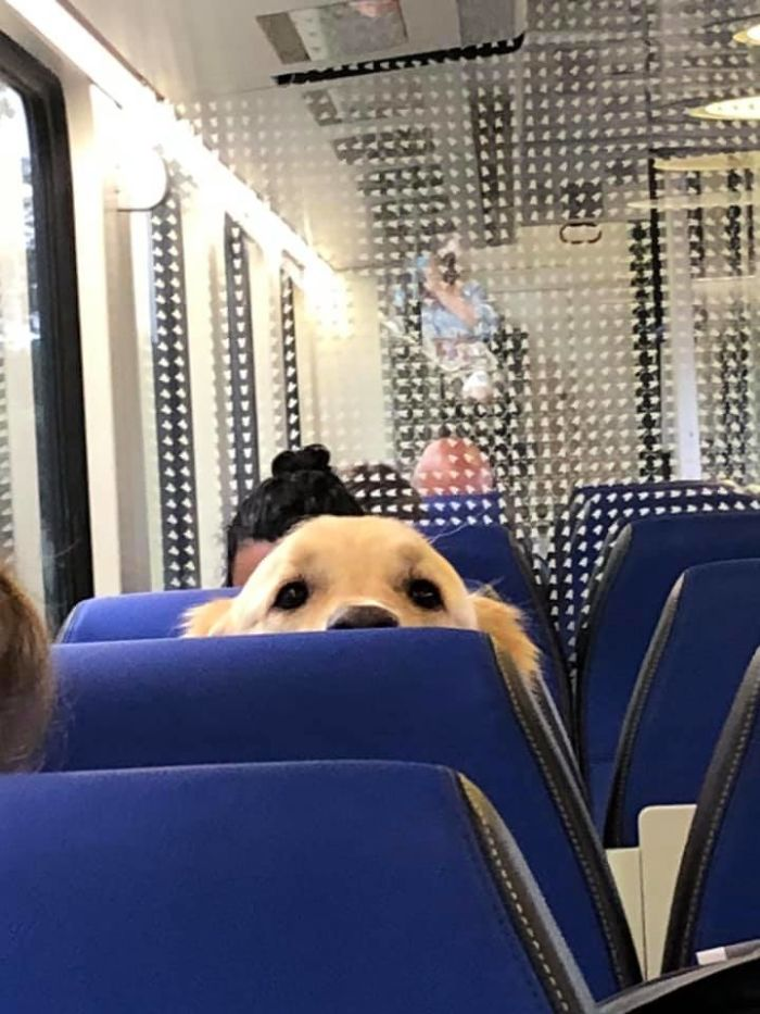funny cute dog spotting pics 5f4ce27ecef8d 700