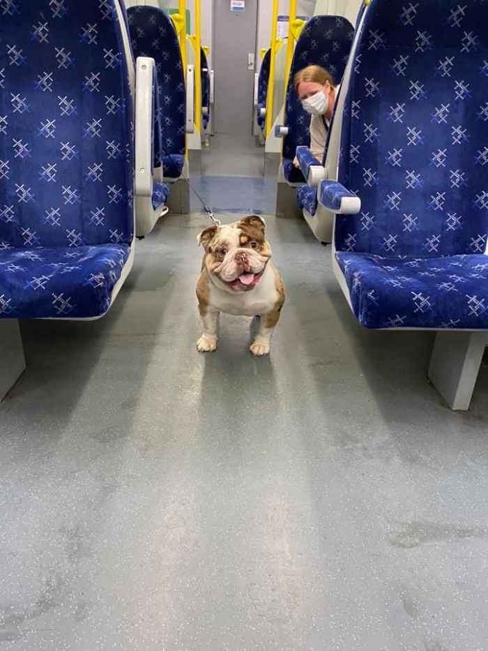 funny cute dog spotting pics 5f4ce3f678fca 700