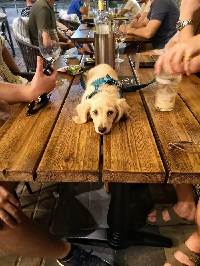 funny cute dog spotting pics 5f4ce4df64c84 700