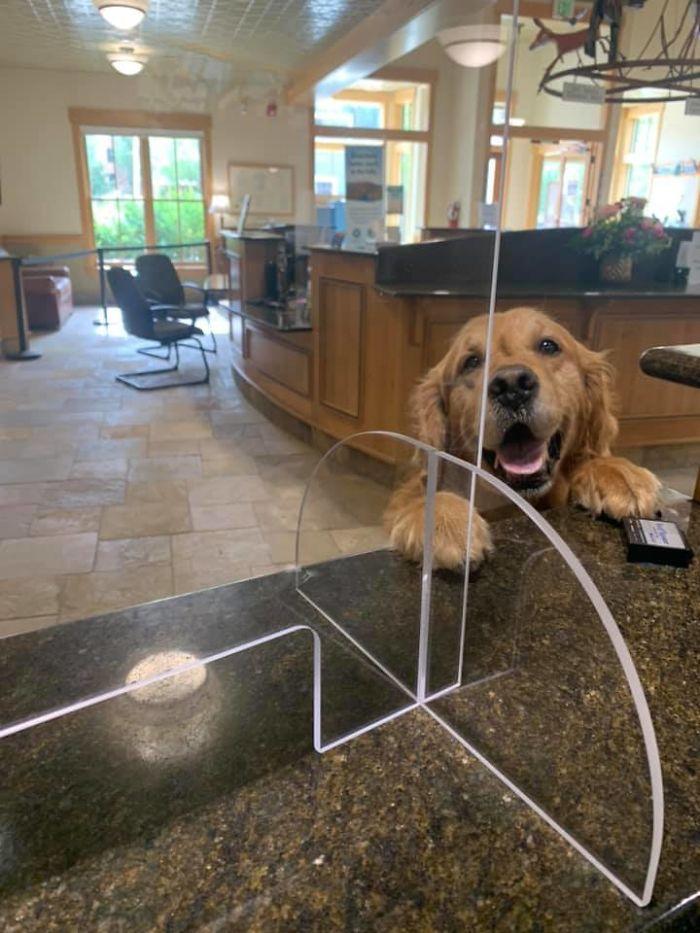 funny cute dog spotting pics 5f4ce63331ec2 700