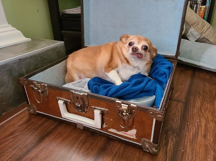 funny cute dog spotting pics 5f4ce90d2ab86 700