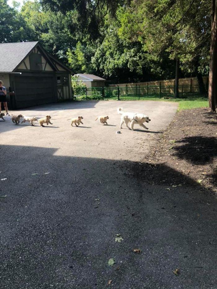 funny cute dog spotting pics 5f4cff7241419 700